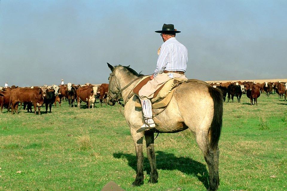 Les gauchos , Les cow boys d'Amérique du Sud , Argentine