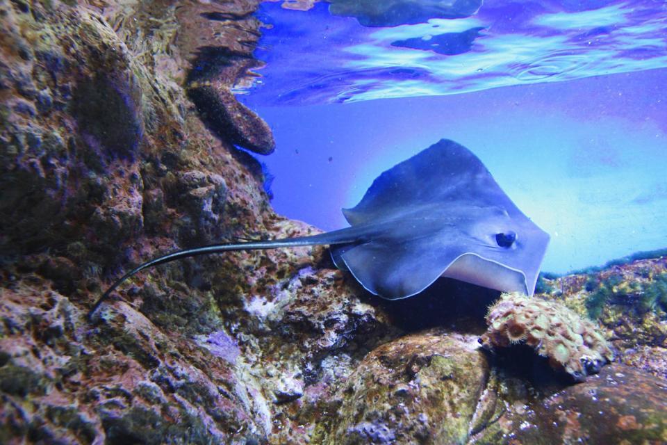 La fauna sottomarina , Libano