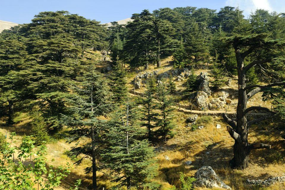 La flore, Liban Paysage Cèdre Horizontal Bcharré
