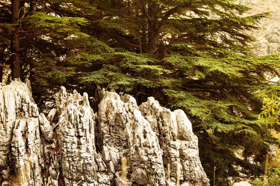 , Forests, The flora, Lebanon