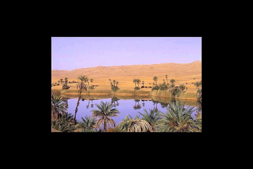 La flore du Sahara , Le Sahara: la végétation , Libye