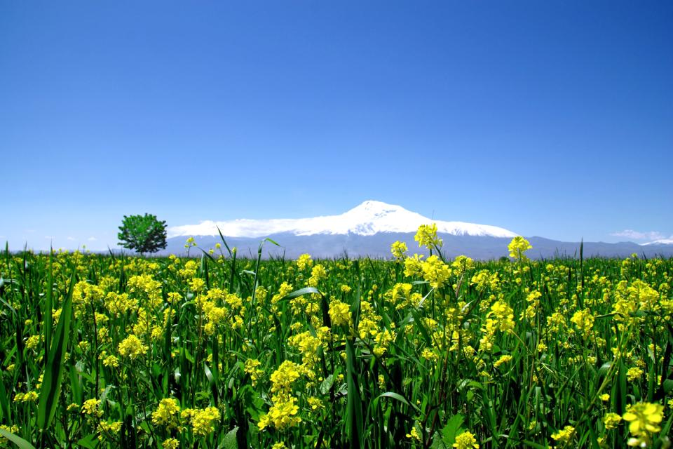 Das Ararat-Tal , Armenien
