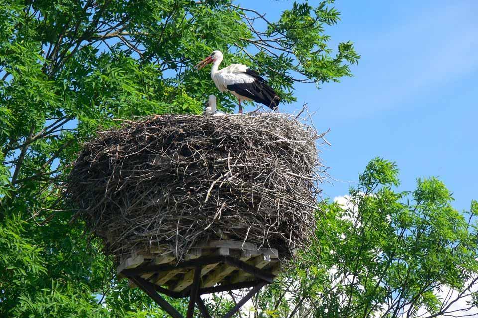 Die Schutzgebiete, die Wälder , Litauen