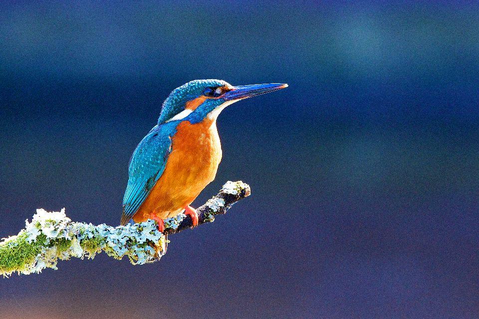 Vögel, Fische. , Luxemburg