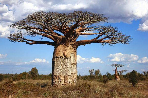 The savannah , Madagascar