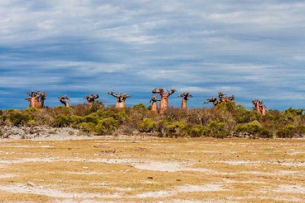 Die Savanne , Madagaskar