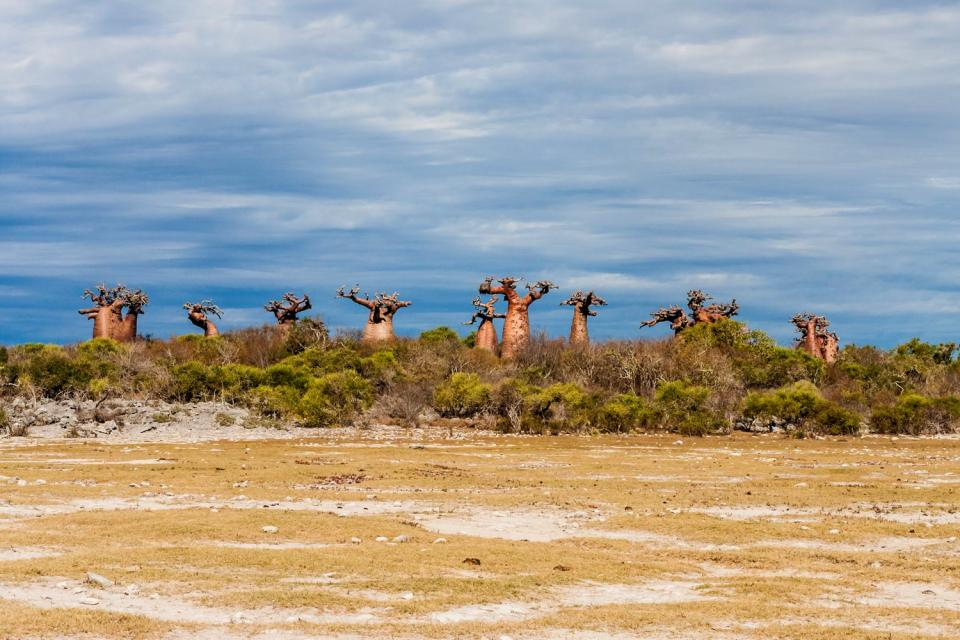 La savane , Madagascar
