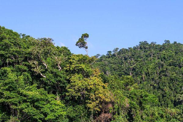 Der Regenwald , Madagaskar