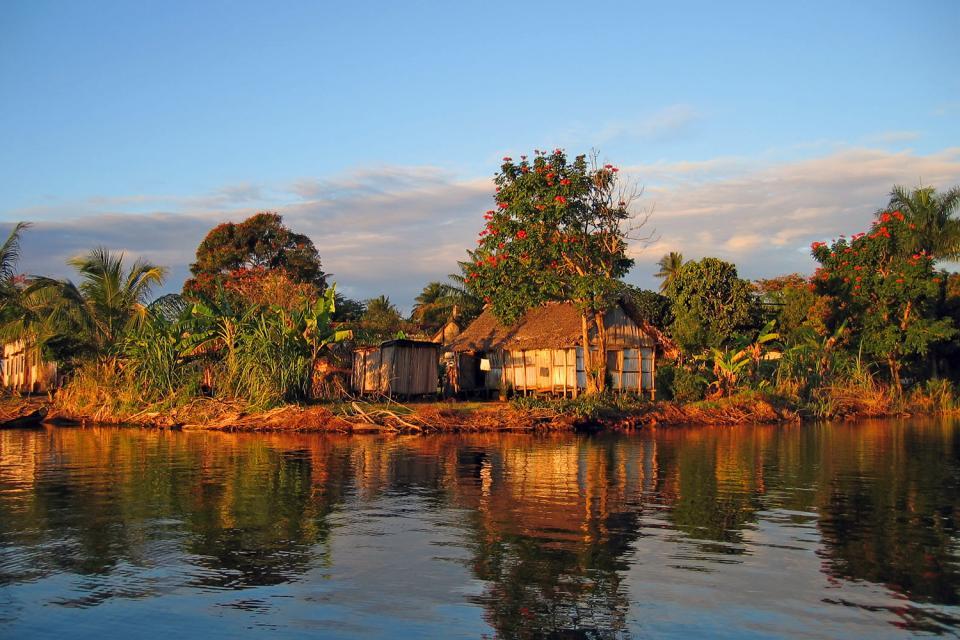 La forêt pluviale , Madagascar