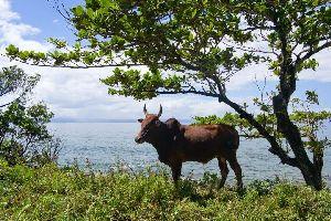 La costa este , Madagascar