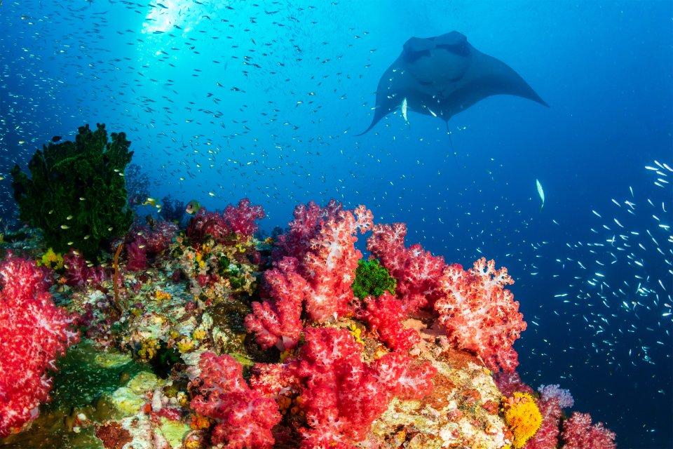 Les côtes, Nosy Be, océan indien, île, madagascar, afrique, plage, sous-marin, animal, faune, poisson, raie