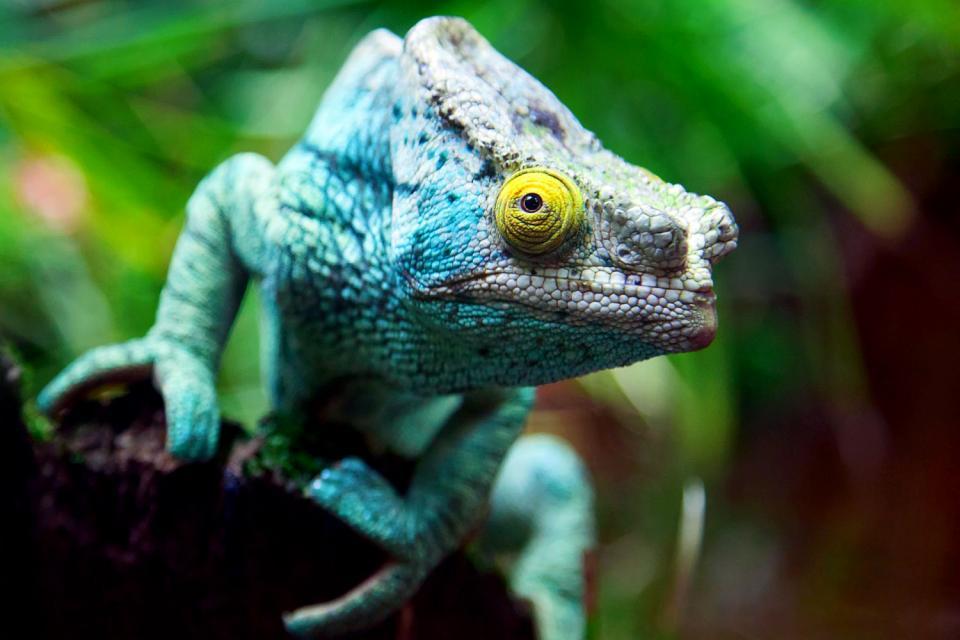 Especies endémicas en peligro , Madagascar