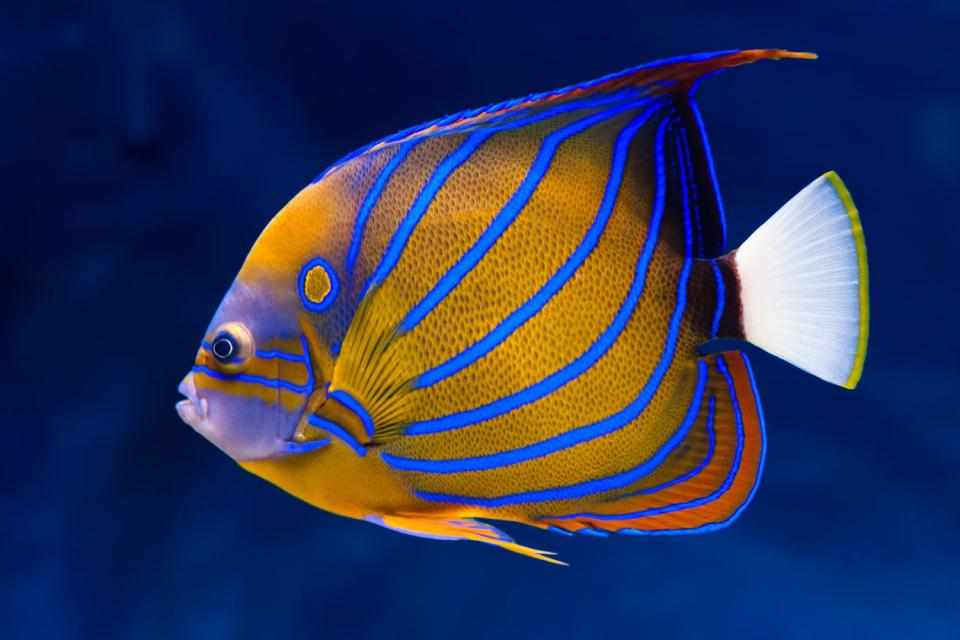La fauna submarina , Madagascar
