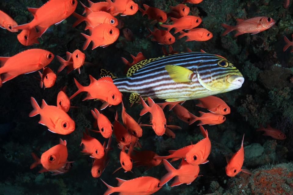 La faune sous-marine , Madagascar