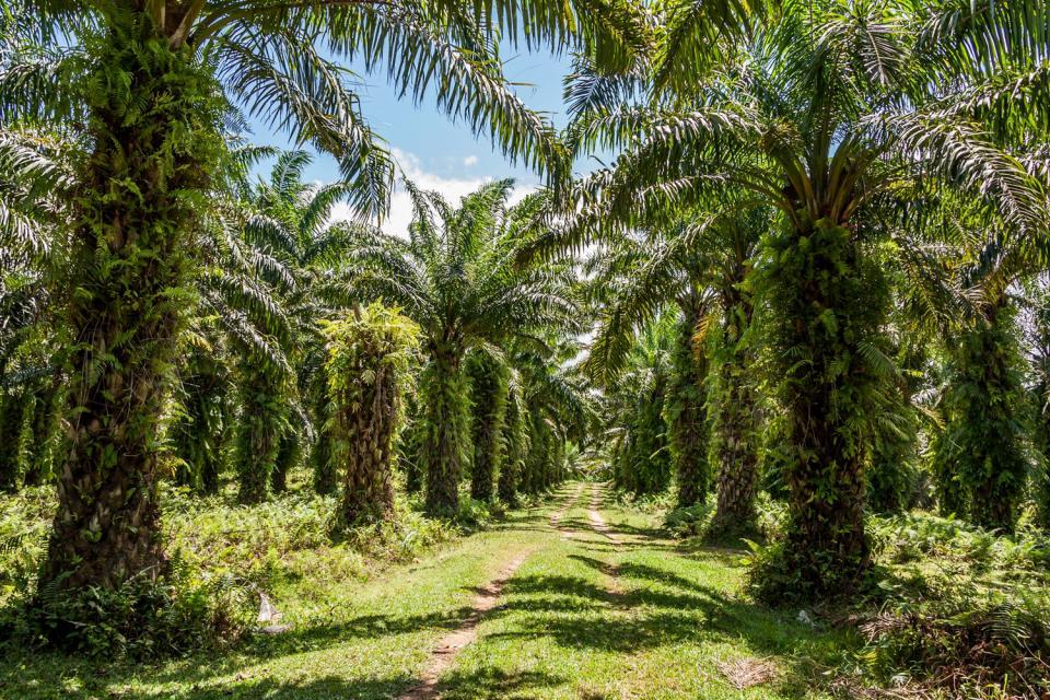 Plant life , Madagascar