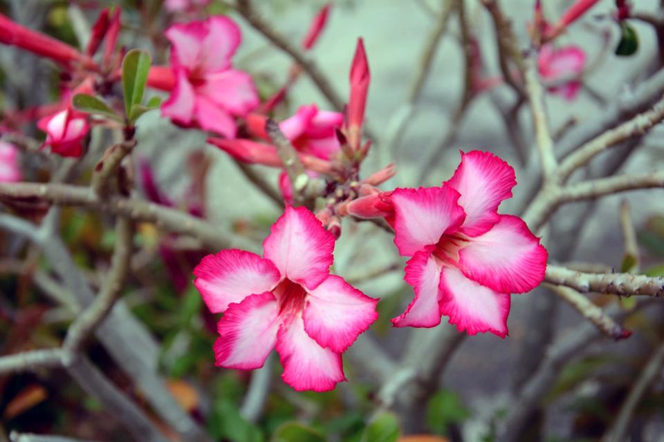 Plant life , Flora , Madagascar
