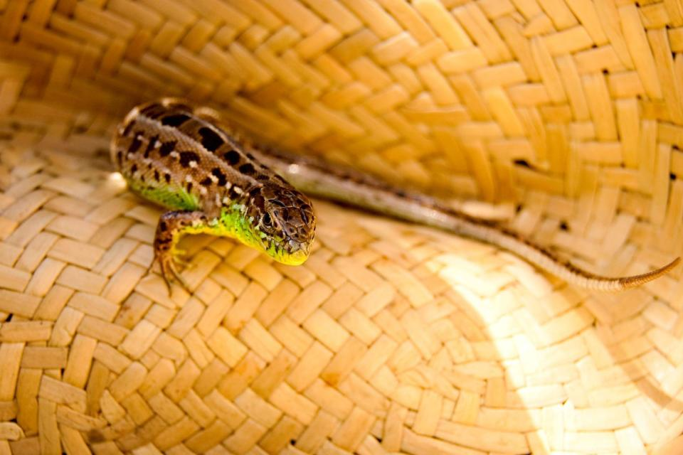 Les vanneries , Madagascar
