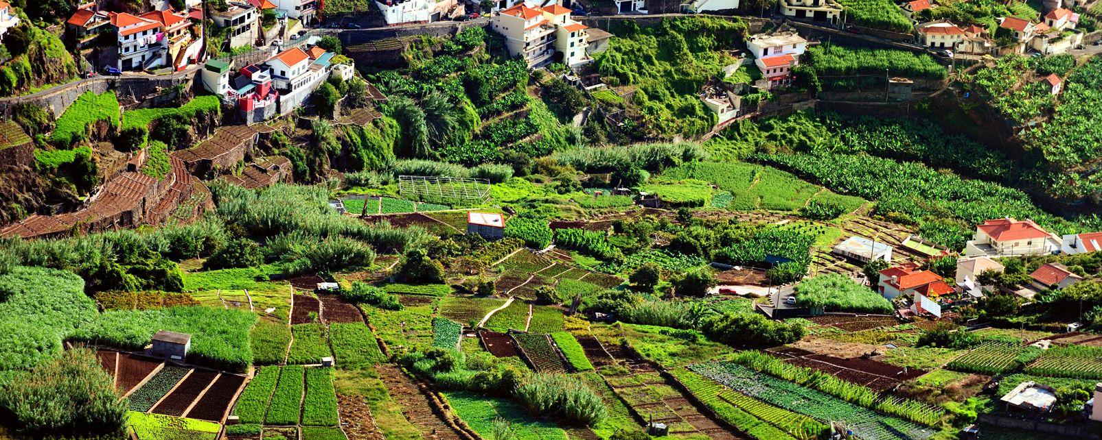 Landwirtschaft Portugal