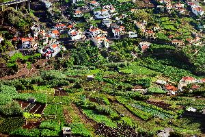 Die Landwirtschaft , Ernte auf den Anbauterrassen , Portugal