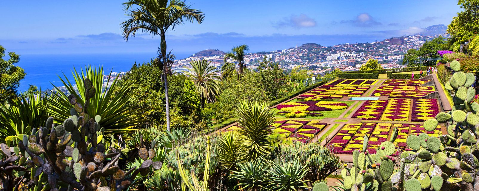 The Funchal botanic garden. , A countryside full of flowers , Portugal