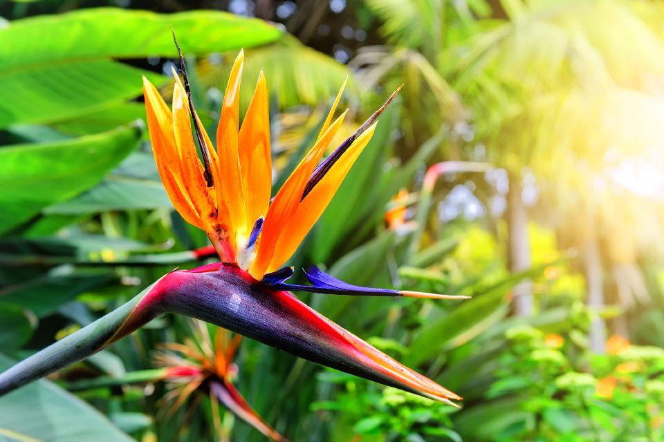 Der botanische Garten von Funchal , Portugal