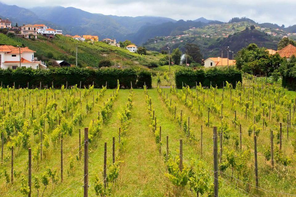 La faune et la flore, agriculture, camara de lobos, madère, vigne, vin, portugal