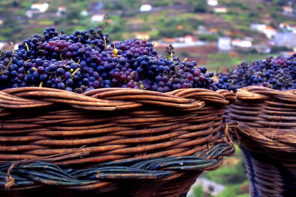 La vigne , Portugal