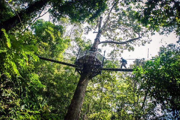 Der Nationalpark von Taman Negara , Der Nationalpark von Taman Negara, Malaysia , Malaysia