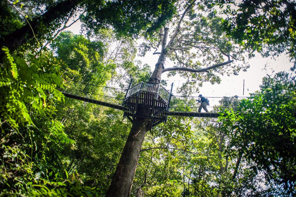 Le Parc national de Taman Negara , Le Parc national du Taman Negara, Malaisie , Malaisie