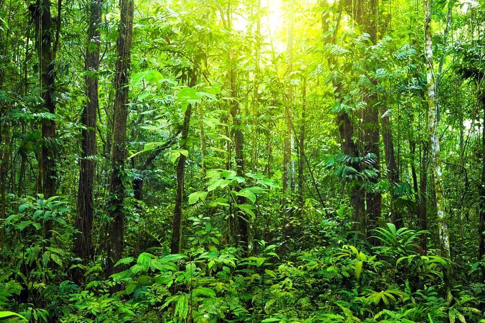 La jungle du Sarawak (Bornéo) , La forêt de Sarawak , Malaisie
