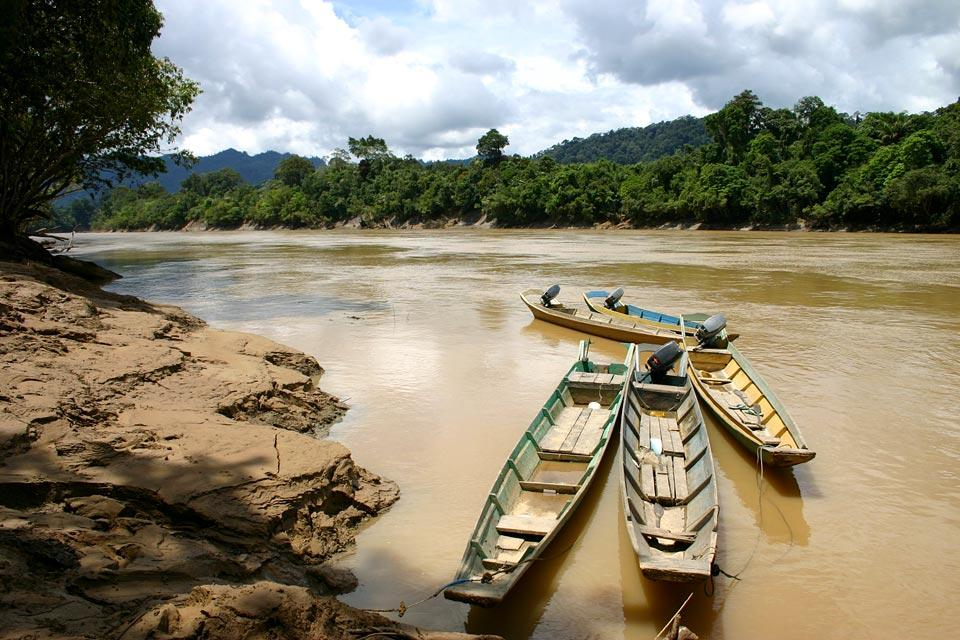 La jungle du Sarawak (Bornéo) , Le parc national de Bako , Malaisie