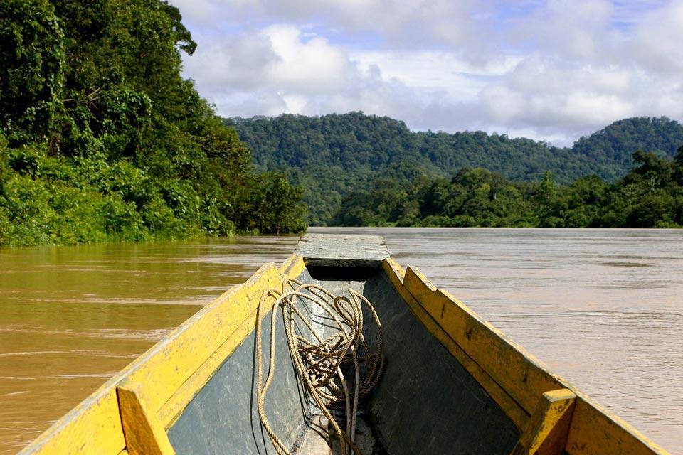 La jungle du Sarawak (Bornéo) , La végétation de Bako , Malaisie