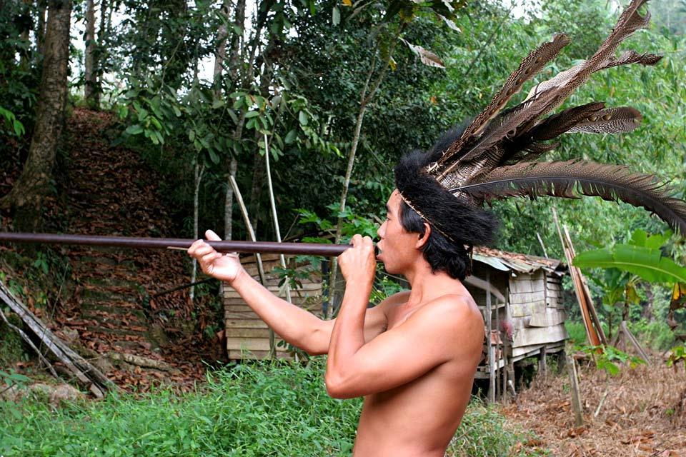 La jungle du Sarawak (Bornéo) , Malaisie