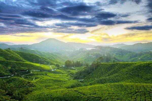 Cameron Highlands , The Cameron Highlands, Malaysia , Malaysia