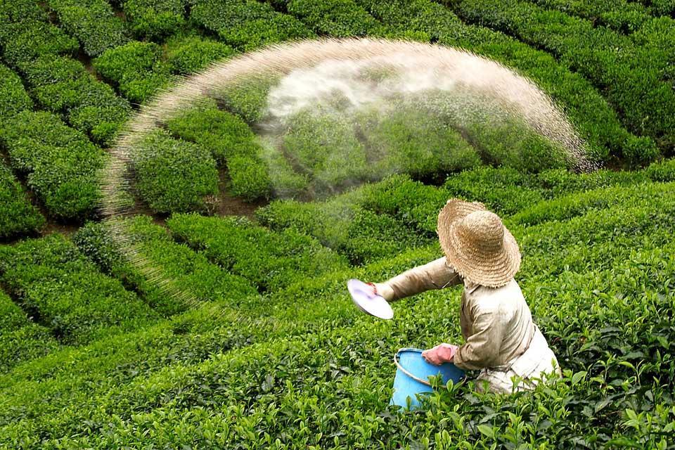 Plantación de té BOH , Malasia