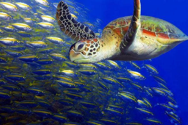 Die Unterwasserfauna , Der Meeresgrund von Malaysia , Malaysia