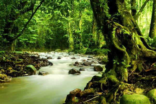 Der Dschungel , Der malaysische Dschungel , Malaysia