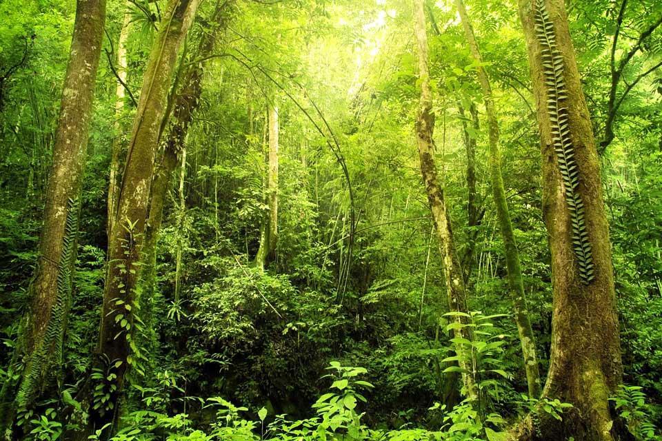The jungle , Malaysia