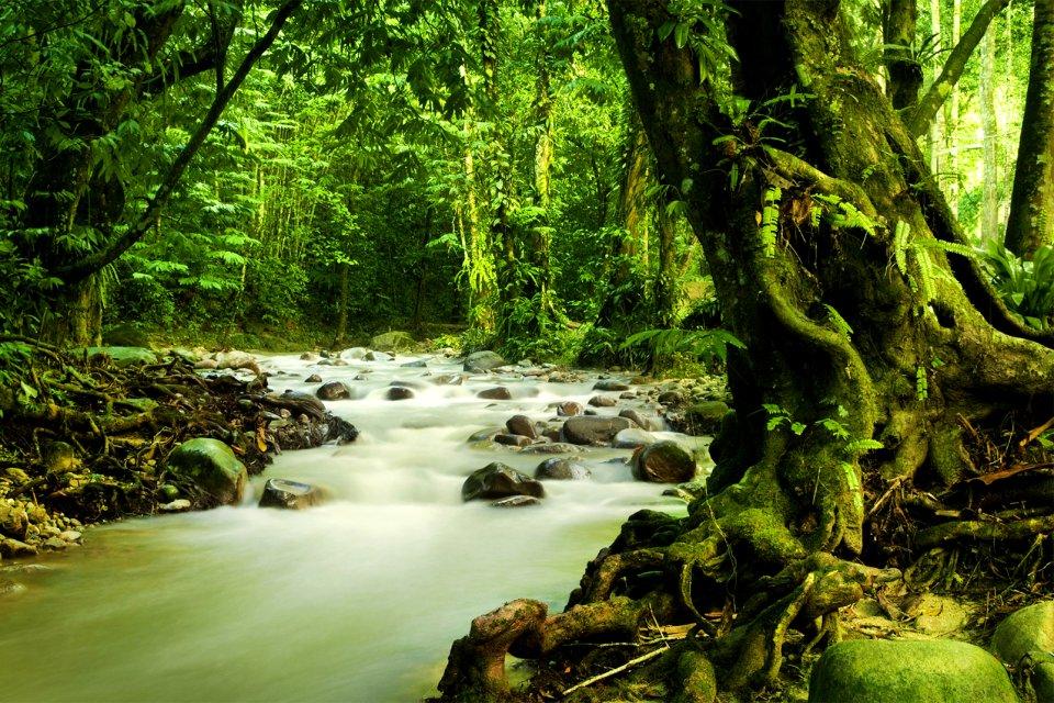 The Malay jungle, The jungle, The fauna and flora, Malaysia