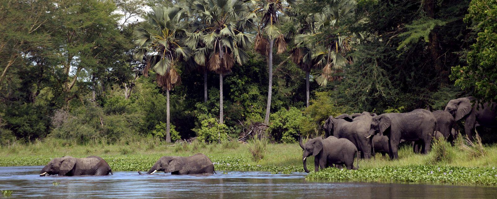 Les paysages, Afrique Malawi Parc National Liwonde éléphant elephant pachyderme faune animal