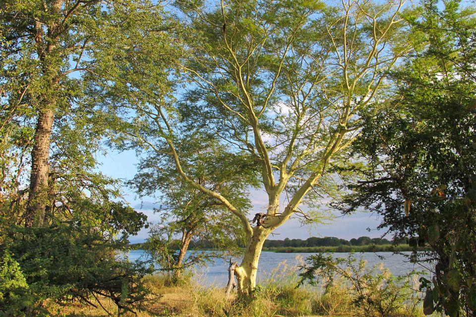 Les paysages, Malawi afrique parc rivière Parc National Liwonde reserve