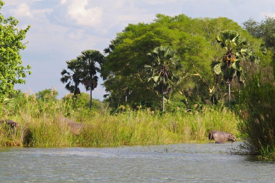 Les paysages, Liwonde Malawi afrique parc Parc National reserve hippopotame faune