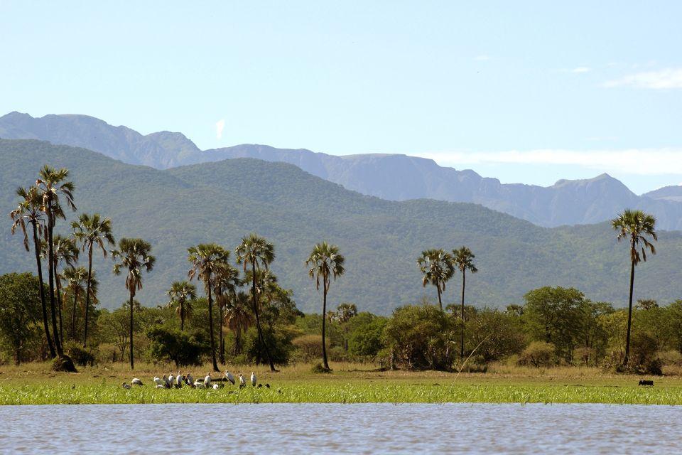 Les paysages, Afrique Malawi Parc National Liwonde Tantale ibis tantale echassier oiseau faune animal.