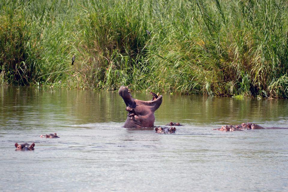 Les paysages, Afrique Malawi faune rivière riviere hippopotames