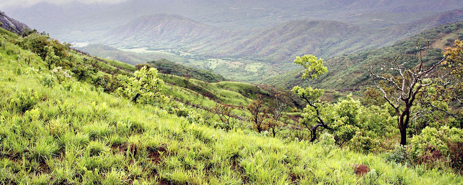 Les paysages, Afrique Malawi Parc Nyika Nyika national park