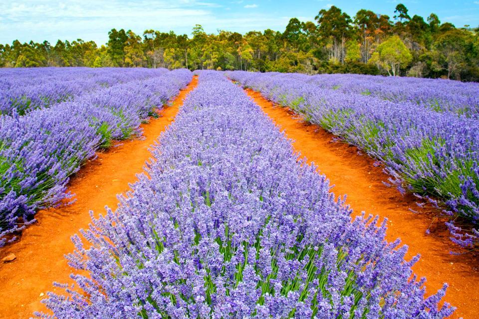 Tasmania , Rainforest and dunes, Tasmania , Australia