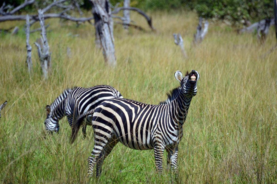 , Wildlife, The fauna and flora, Malawi