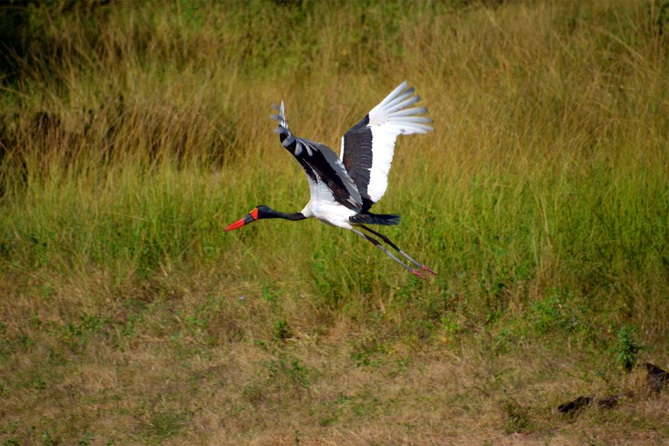 The birds of Malawi, Wildlife, The fauna and flora, Malawi