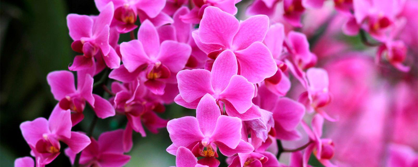 La faune et la flore, Afrique Malawi flore végétation nature fleur orchidée