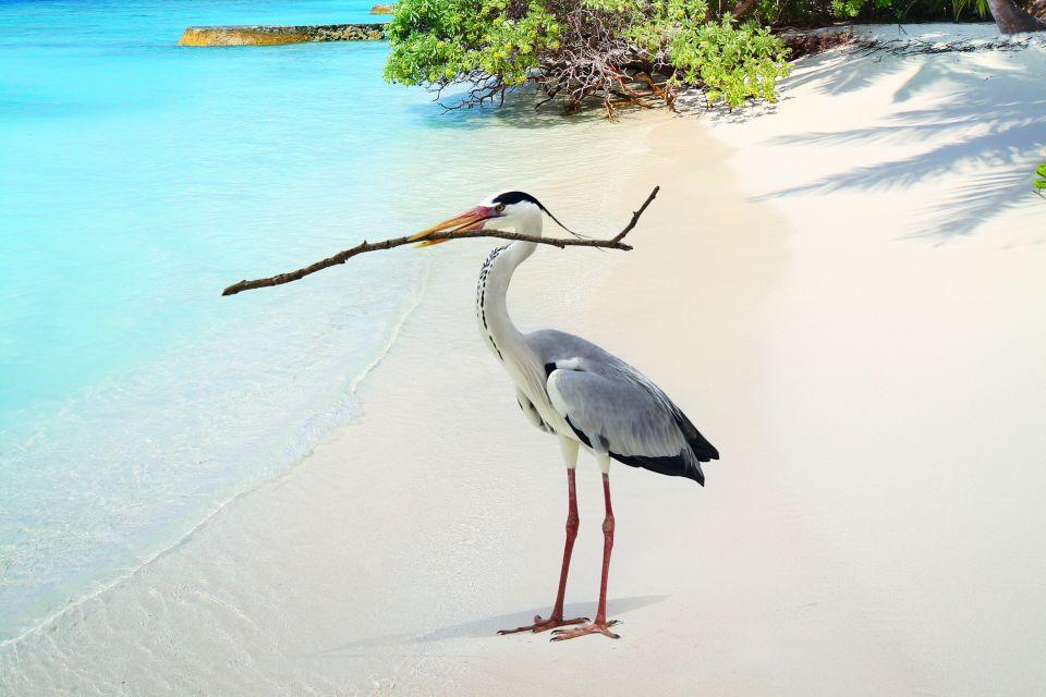 Atollo di Malé Nord - L'isola di Baros, Le rive, Maldive